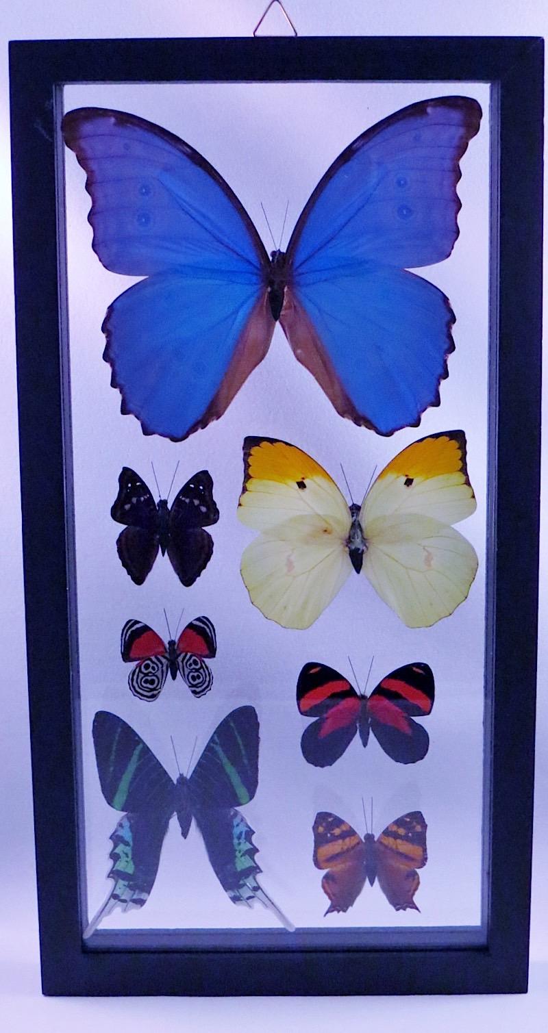 webButterflies Peru  (1)