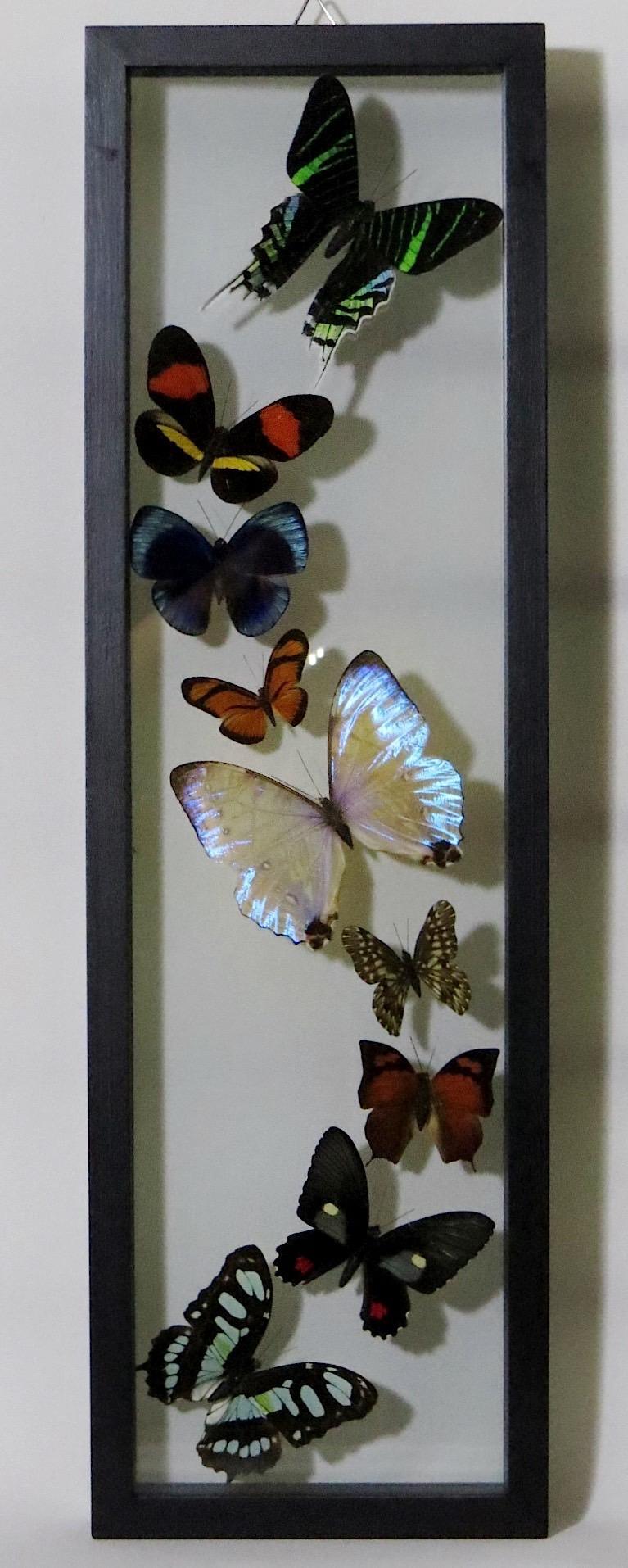 webButterflies Peru  (2)