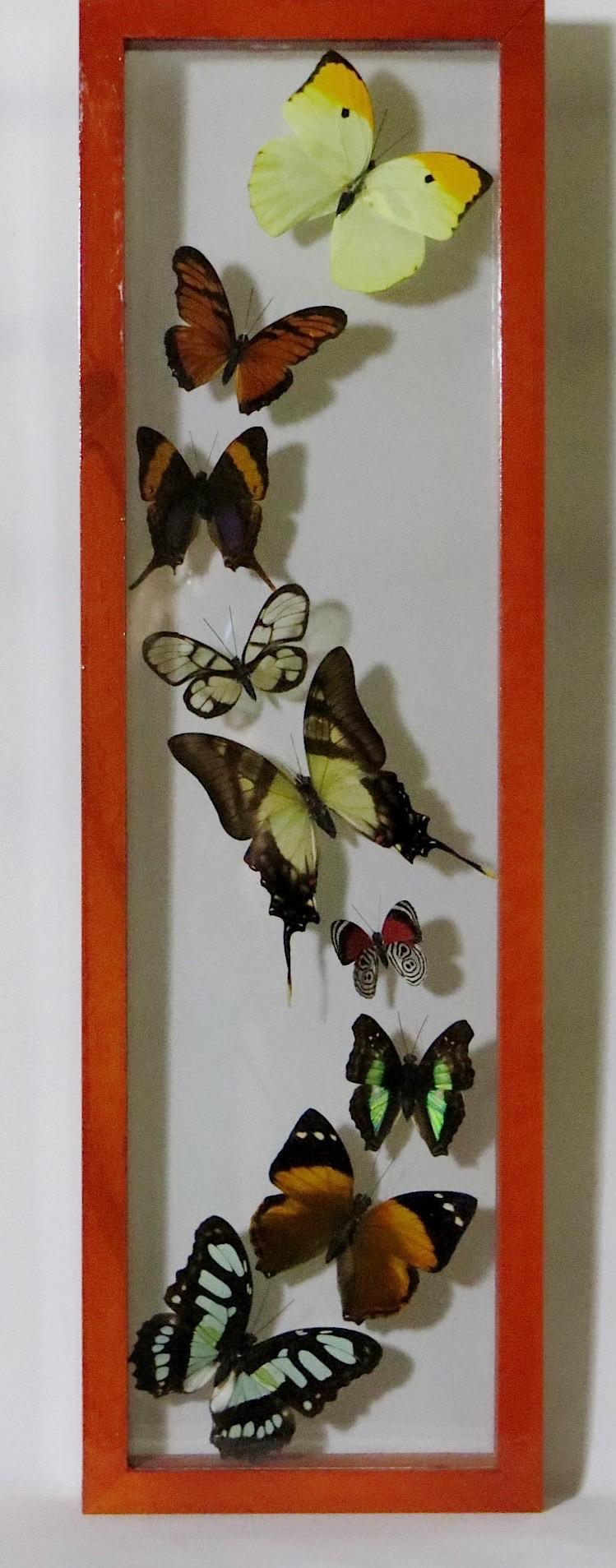 webButterflies Peru  (3)