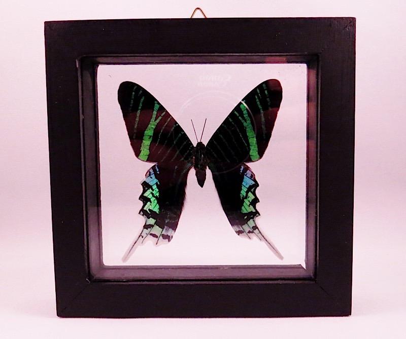 webButterfly Peru (1)