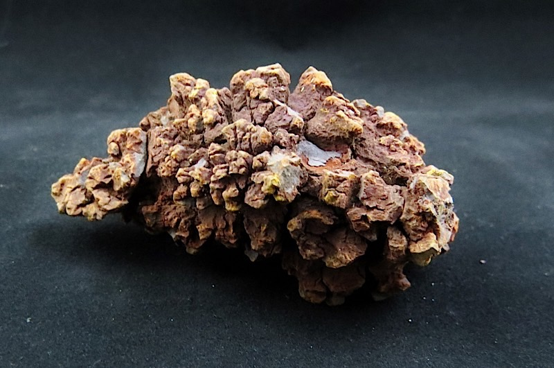 webFossil Coprolite Reptile Dung         65 Million Yrs Old Madagascar