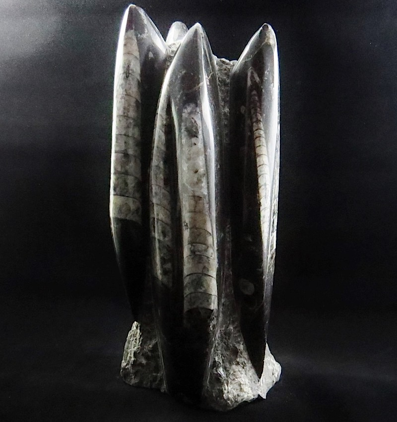 webFossil Orthoceras  Tower 11 Inches Tall 400 - 450 Million Yrs Old Morocco